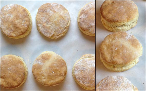 Buttermilk Biscuits Fresh From The Oven